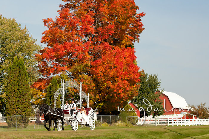 Wisconsin Wedding Photographer horse drawn carriage venue